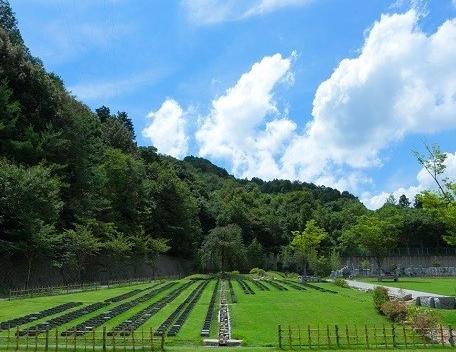 樹木葬 京都