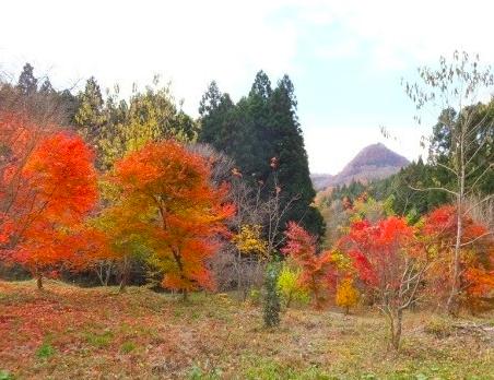 樹木葬 宮城 仙台
